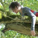 Improvisation dans un arbrede l'abbaye de Noirlac